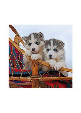 Puzzle 500 pz cachorros de husky - 26915230